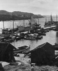 Moderna bryggor och fiskebåtar mot en förgrund av traditione