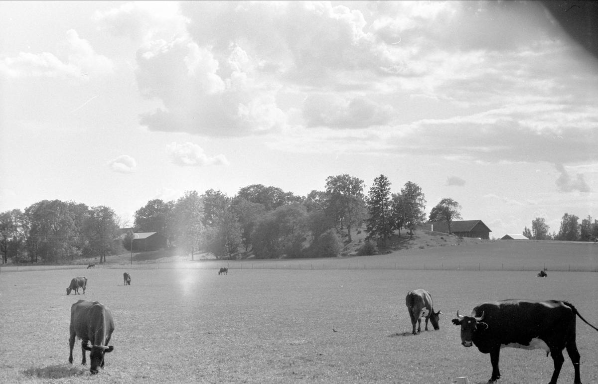 Vy över Lytta 1:4 och 1:6, Lytta, Bälinge socken Uppland 1976