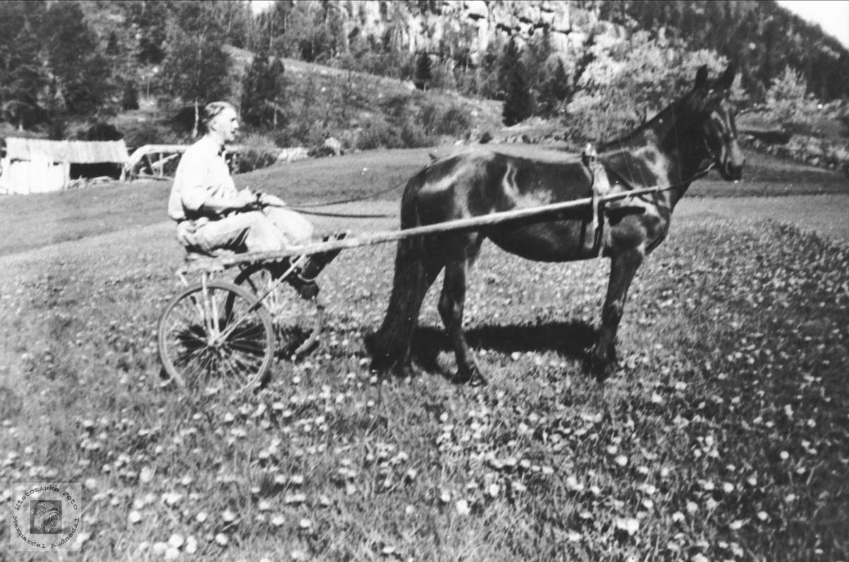 Med hest og sulky på Foss, Bjelland