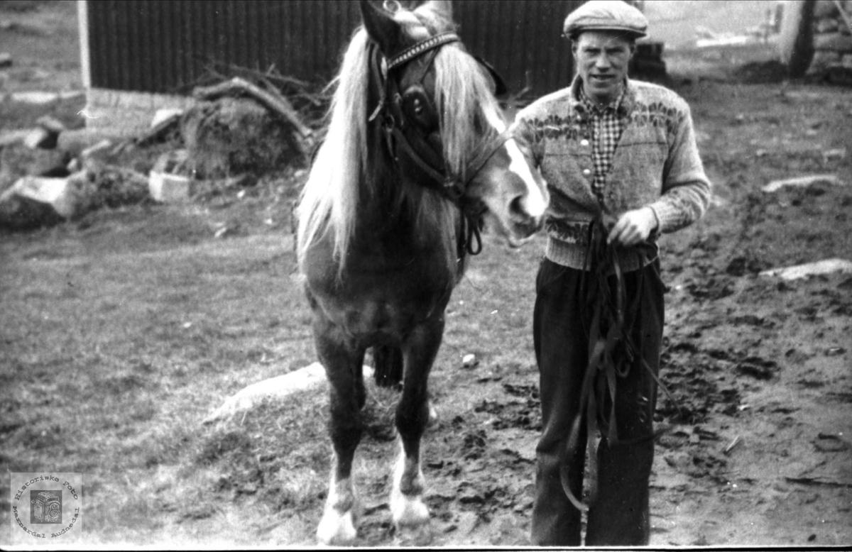 """Portrett av hest og mann. """"Lynild"""" og Gunnar Nordstrøm, Laudal."""