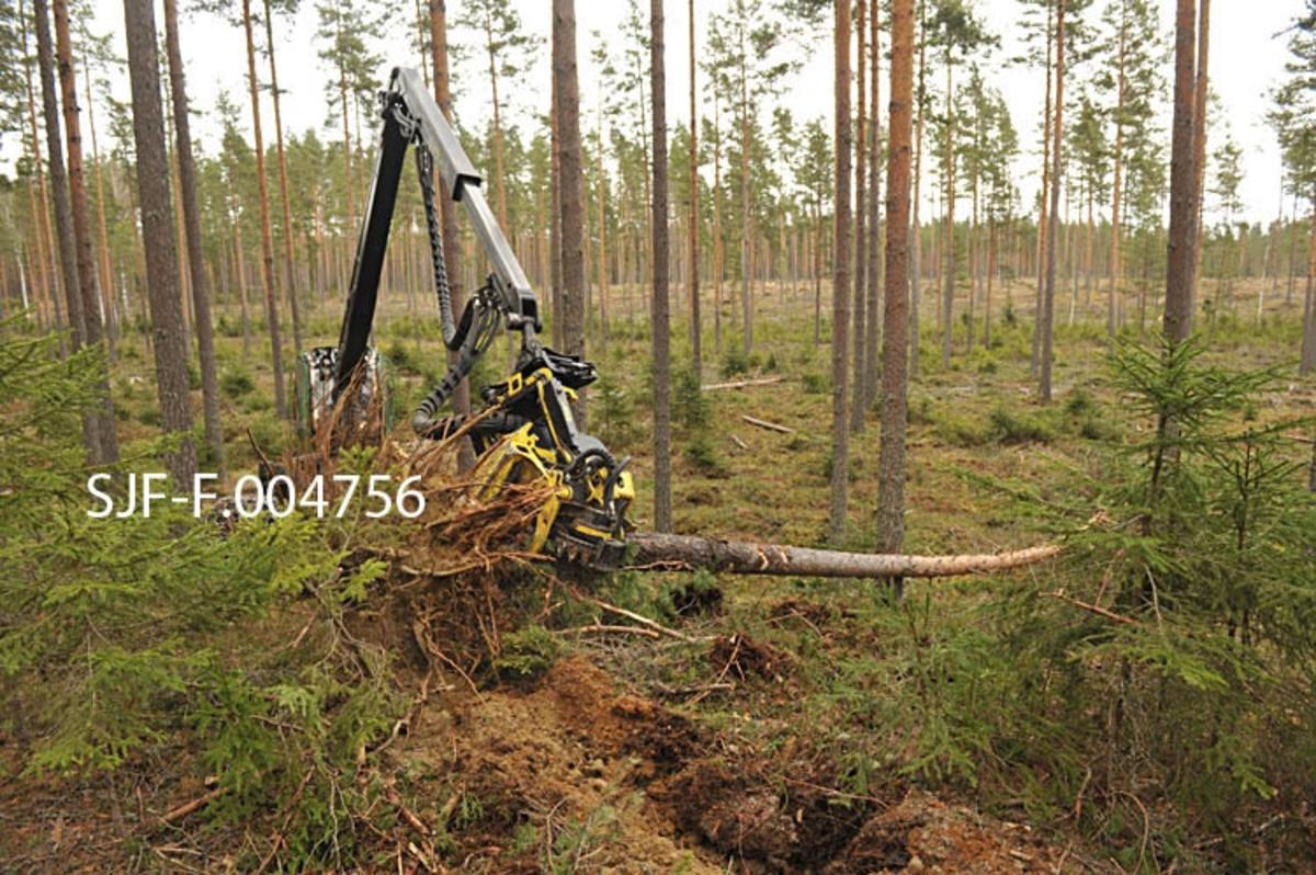 Skogsmaskinfører Jostein Nohr Skybakmoen som arbeider hos Johansen Skogsdrift AS rydder med en lett tynningsmaskin John Deere 1070E som brukes i opprydningsarbeidet etter romjulsstormen Dagmar. Bildet er tatt i forbindelse med dokumentasjonsprosjekt i Sormerudskogen i Elverum.   En av utfordringene med oppryddingsarbeidet var at arbeidet går saktere, siden tømmeret ligger nede på bakken, og er vanskelig å få opp. Skogsmaskina er konstruert for å felle stående trær, og når tømmeret ligger nede risikrer man å treffe en stein eller bakken. Dette skaper fort slitasje på kjede på maskina, og det må fort skiftes flere ganger i løpet av en dag. Maskinføreren skanner feltet før han begynner å kjøre. Han må finne retningen for hvor han skal kjøre ut fra både terrenget, og hvor det går veger.   Maskina kjøres inn på siden av stokken for å komme til i riktig vinkel. Maskina velter så rota tilbake på plass, slik at maskina kan kjøre oppå. Det var lite tele i bakken da stormen kom, derfor er kun 2 prosent av det stormfelte tømmeret brekt.   Norsk Skogmuseum har dokumentert skogskader etter stormen Dagmar som herjet i romjula 2011. Opprydningsarbeidet foregikk fortsatt i mai 2012, da Norsk Skogmuseum dokumenterte dette arbeidet.