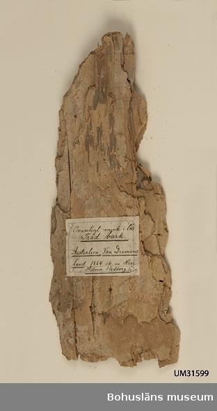 Ett stycke mycket porös bark från ett träd.  Handskriven pappersetikett finns klistrad på barkbiten: Ovanligt mjuk o lös Träd bark. Australien, Van Diemens land 1864 sk. av Herr Hilmer Hedberg.  Uppgift i handskriven gåvoförteckning för år 1862: Hedberg, Hilmer, Herr, Hobarttown, Tasmania, 3 vaser af ormbunkträd förfärdigade af infödingarne på Tasmania, en båge med 2 koger förgiftade pilar, från Nya Holland, prof på bark hvaraf infödingarne förfärdigade tyger, en klubba, utaf konungen af Tessee-öarna skänkt till Herr Hedberg, en Boomerang (ett vapen som nyttjas af infödingarna, en påse flätad af bast, en dito af tråd.  För fler uppgifter om givaren se UM701. Föremålet har funnits okatalogiserat i museets samlingar fram tills år 2011.