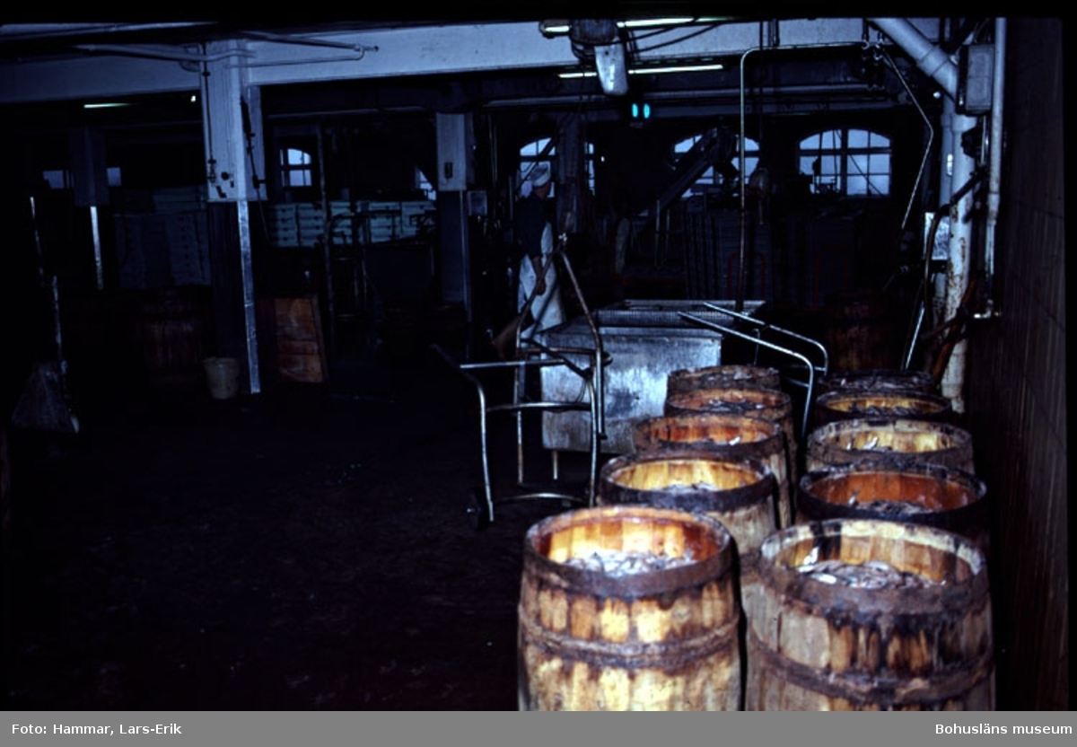 "Fotografens noteringar: ""Abba. Lysekil. Saltning. 20/10 1982."""