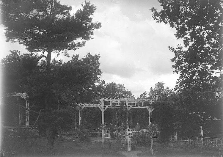 Pergola hos stadsmäklare Kullgren, Stenungsön i september 1926.