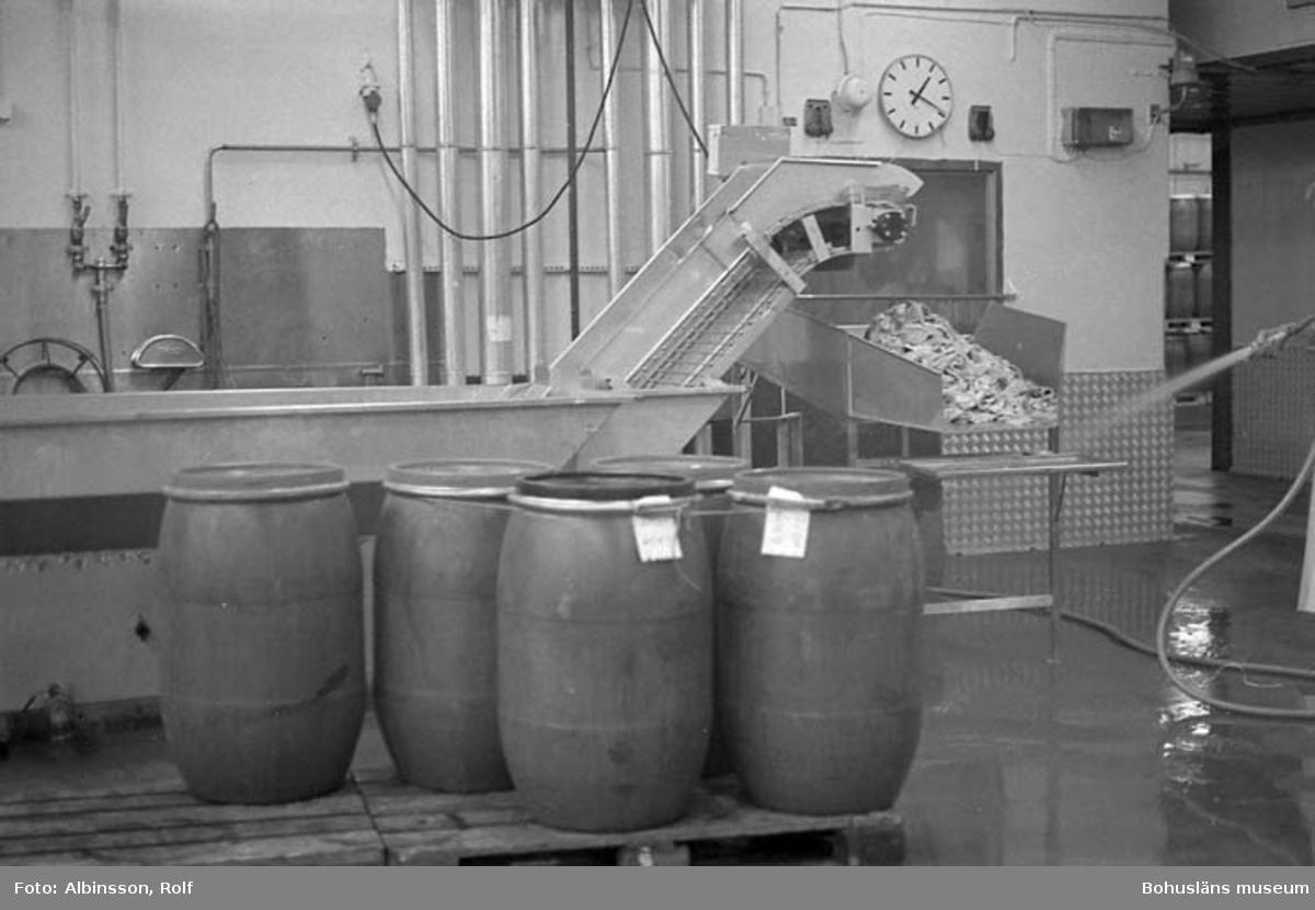 """Enligt fotografens noteringar: """"Samma tunnor, i bakgrunden lakeavskiljare på vilken man tömmer sillen ur tunnorna så att laken skall rinna av.""""  ( Se bild UMFA53734: 0584. AC.)  Fototid: 1996-03-14."""