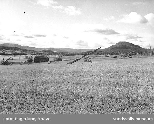 Vy över Sörhångsta med hässjestörar och lada, mot Getberget i bakgrunden.