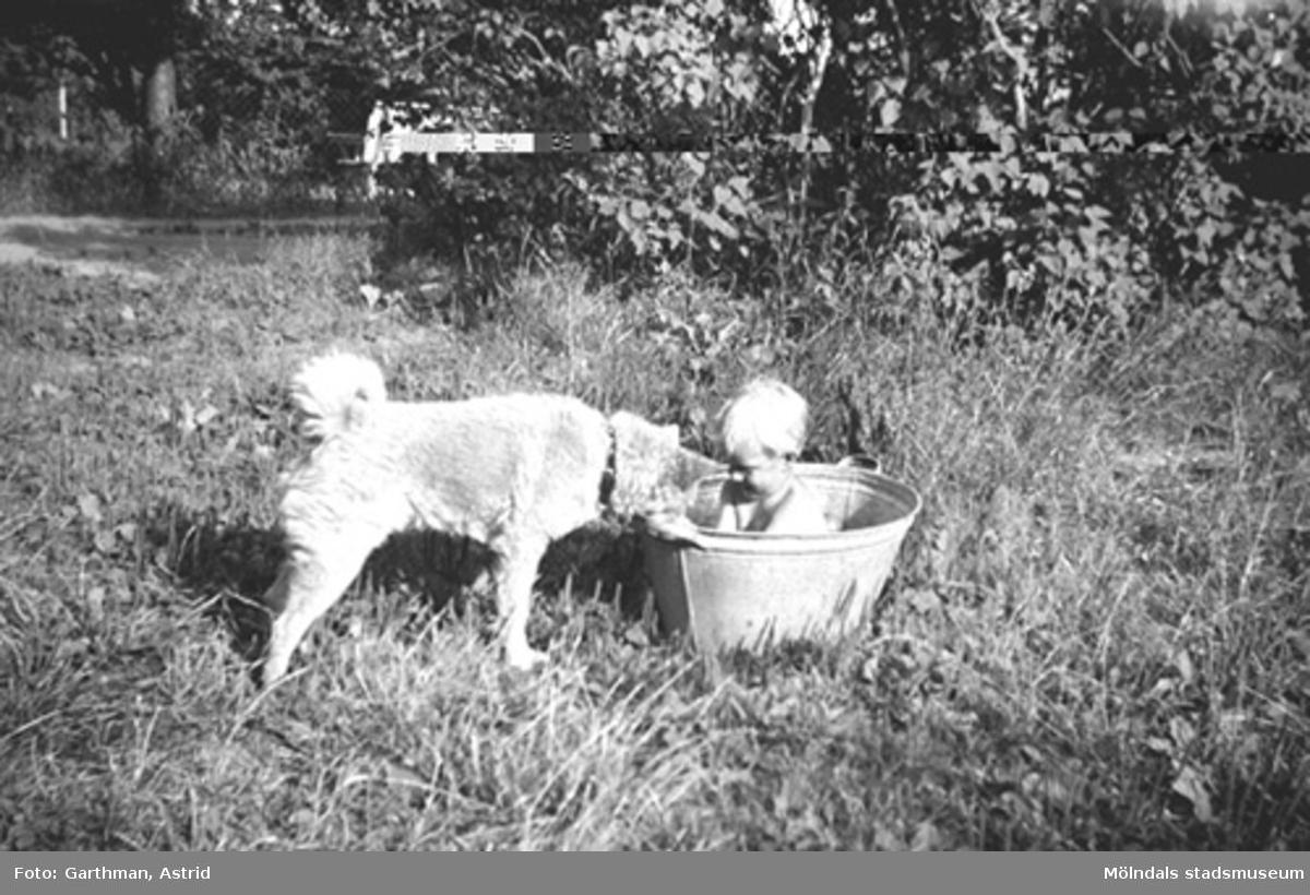 """""""Hunden Moberg 2 är intresserad av vad som finns i baljan jag (Alf Garthman) sitter i"""". Barnhemsgatan 21, 1950-tal. Alf arbetade i många år på Mölndals stadsmuseum."""