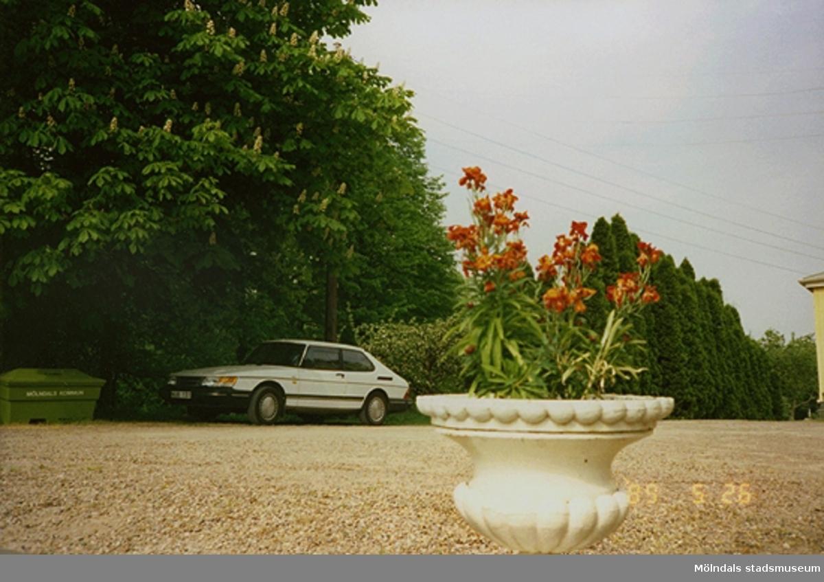 I förgrunden ser man en blomkruka med blommor i som står på grusplanen. I bakgrunden ser man ett stort blommande kastanjeträd. Nedanför trädet står en vit Saab parkerad vid en grön gruslåda.