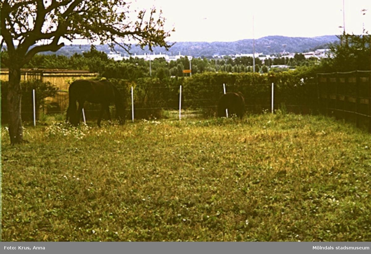 Fässberg. Hästar i en hage.