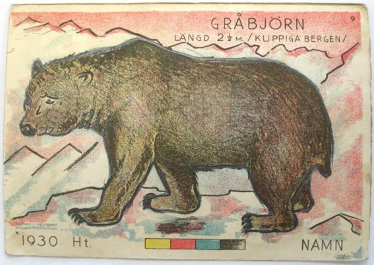 Gråbjörn