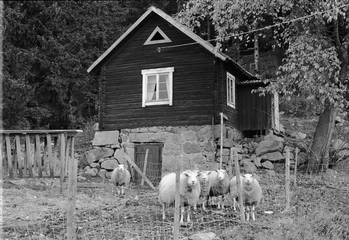 Källarstuga, Brunnsgården, Holmbro 2:3, Skogs-Tibble socken, Uppland 1985