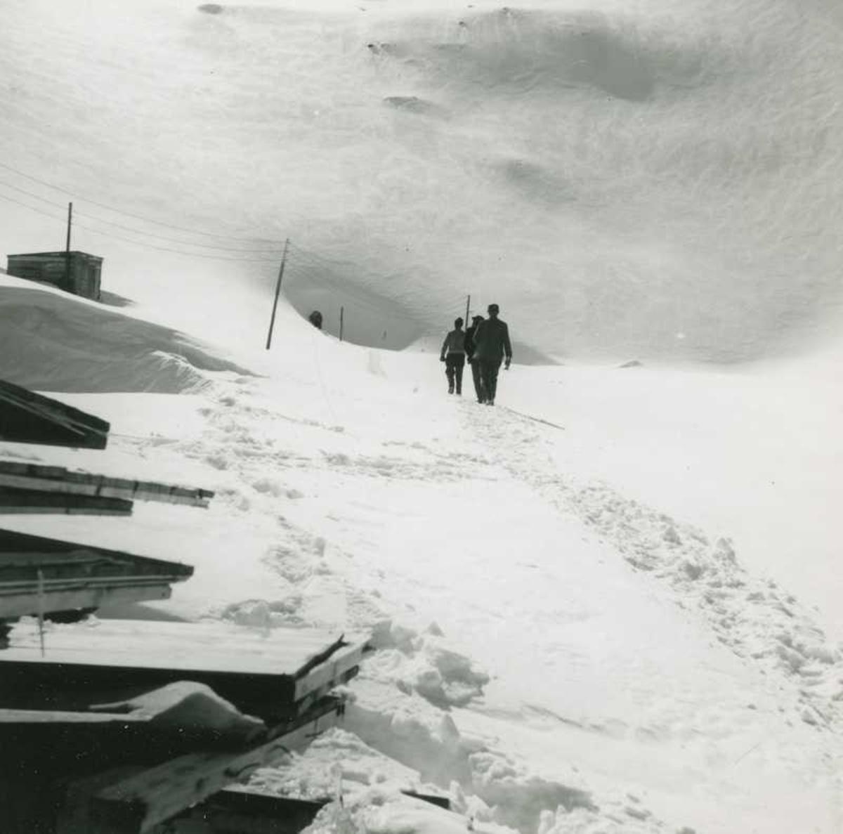 menn Narvik