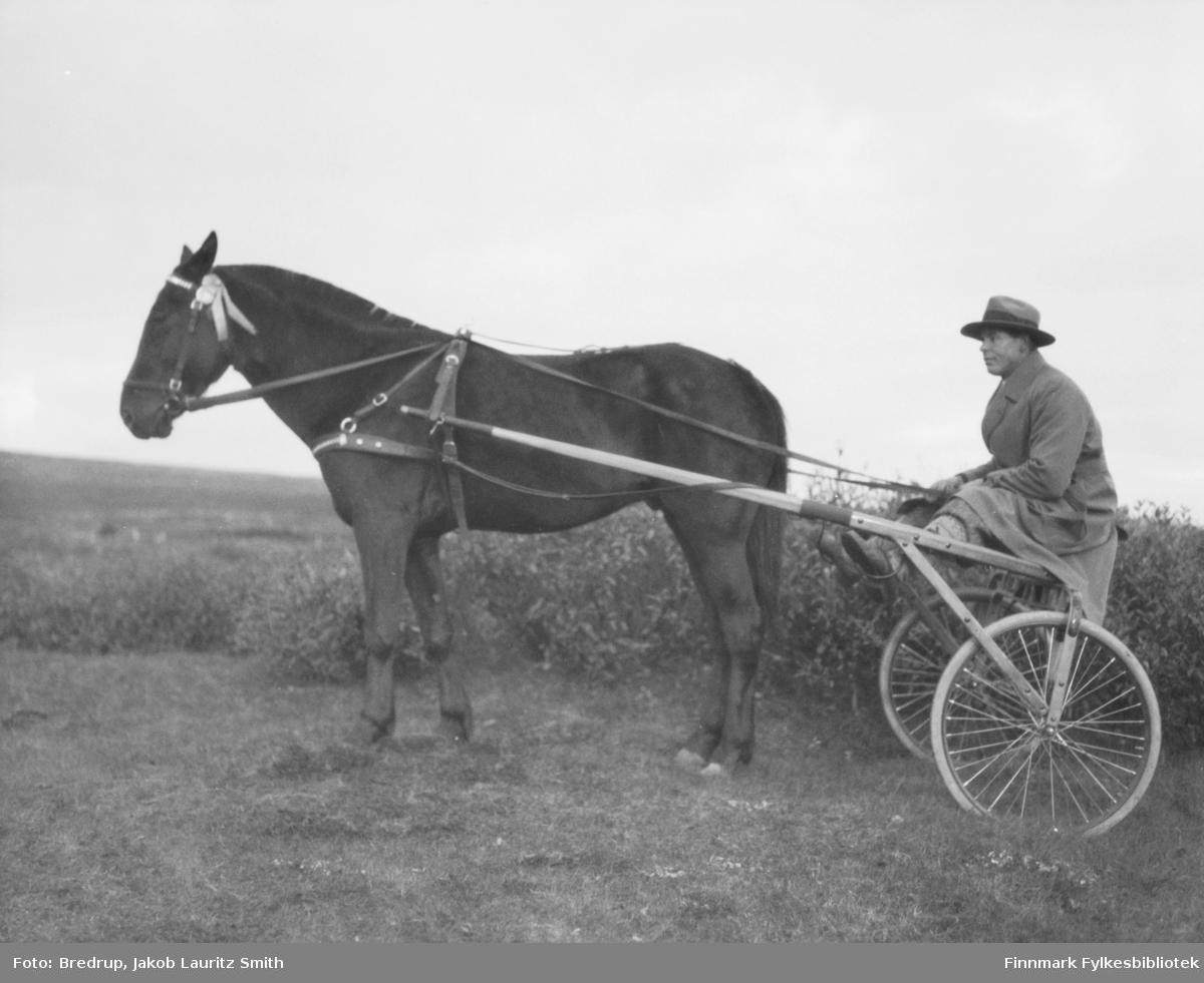 Sverre Larsen sitter i sulkyen.  Hesten kan være 'Stelle' fra FBib.98012-078.