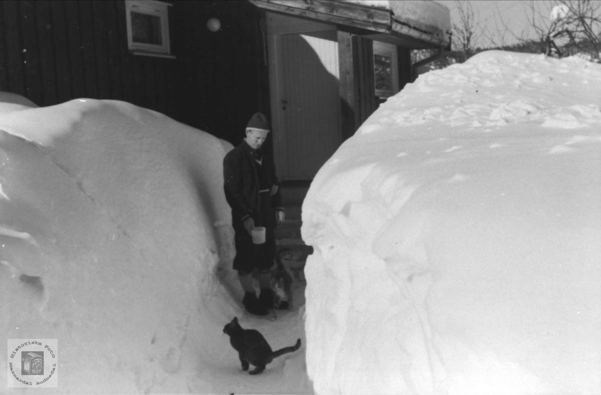 Snøvinter, februar 1977