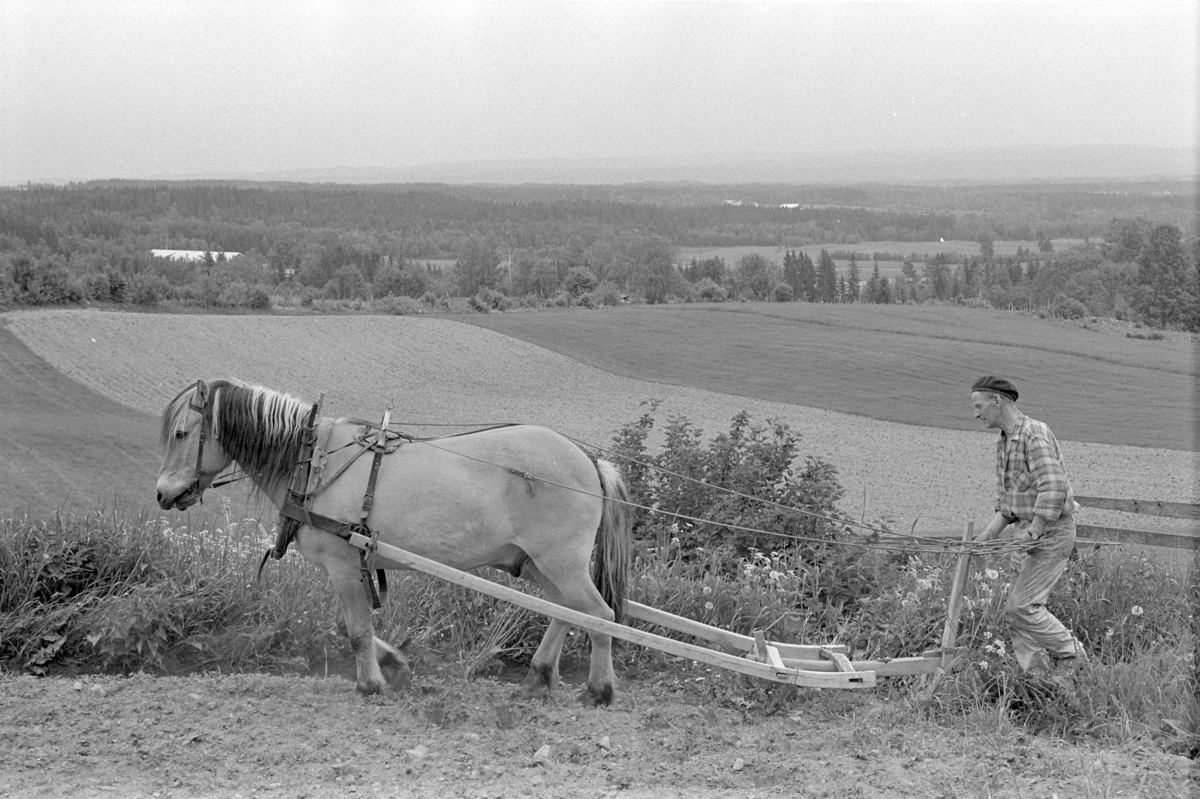 Røsbak, store, Furnes. Gnr.781, bnr.1. Mikael E. Røsbak f. 1918. Hest, hesteredskap, ard.