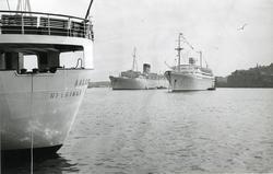 """Foto från 1959 visande turist- & passagerarfartygen """"Caronia"""
