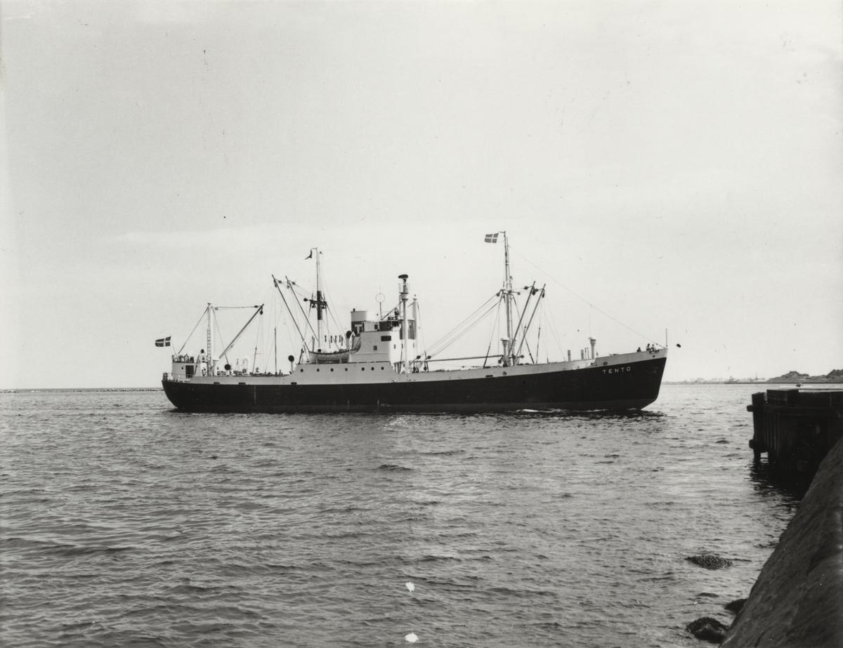 """Foto i svartvitt visande lastmotorfartyget """"TENTO"""". Foto från Köpenhamn juni månad 1959."""