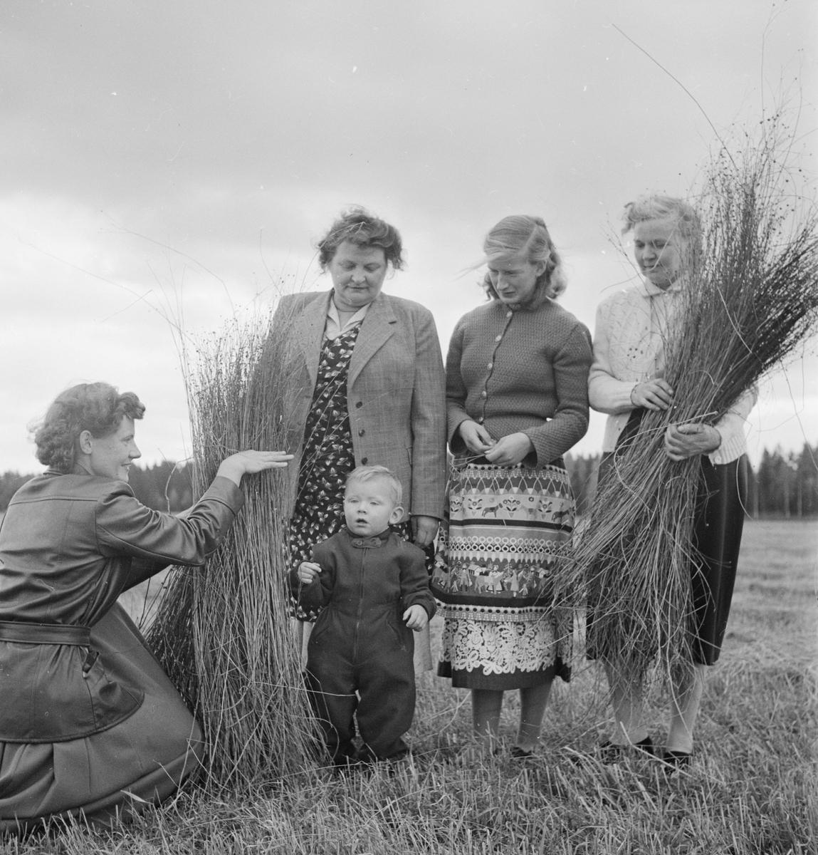 Astrid och Peter Alfvén, Astrid Andersson, Marietta Rasto och Ruth Larsson med lin som odlats i Götbrunna