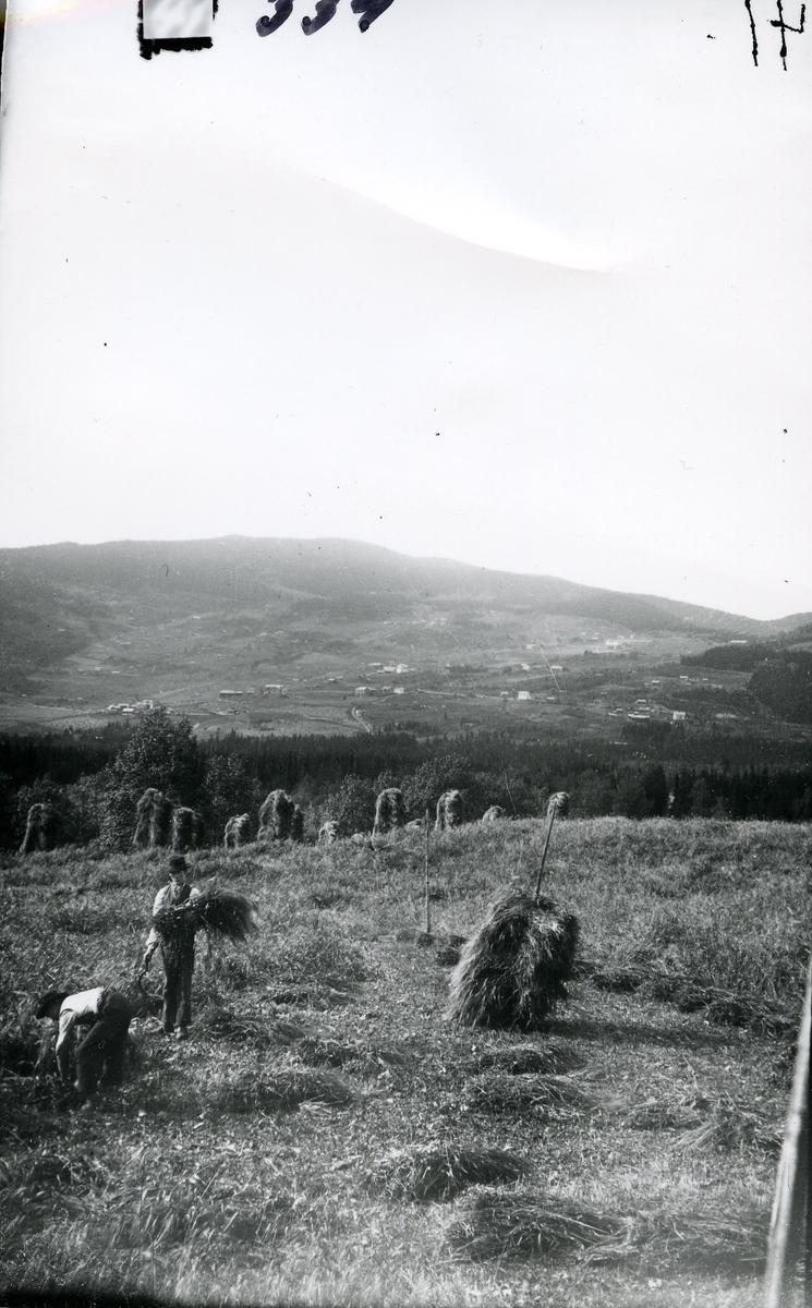 Skuronn. To arbeidskarer setter opp kornstaur. Utsikt fra Rogne mot Volbu i Øystre Slidre.