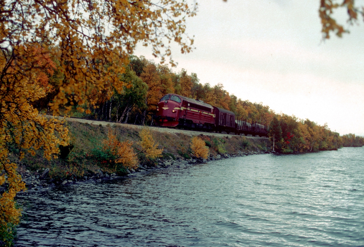 Godstog 5721 Hamar - Trondheim ved Rugelsjøen