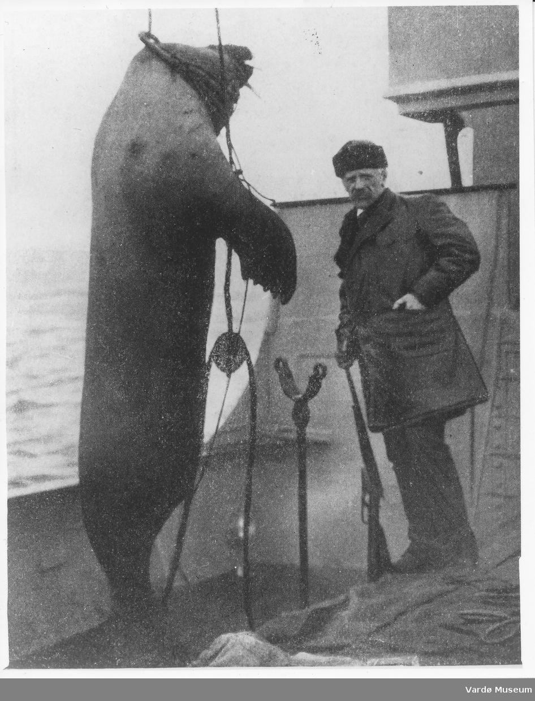 Nansen og en hvalross som er skutt, heist opp om bord i «Correct».