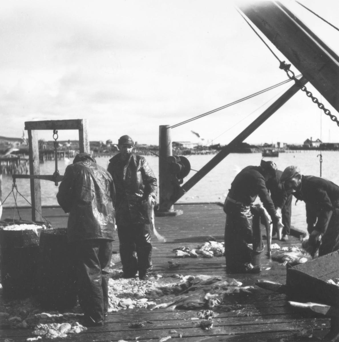 fiskere på Prestelv kai i Vadsø.