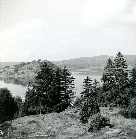 Sommaren 1959. Utsikt från tomten över Högholmen. Till vänster utanför bilden Wetterlunds hus. På denna tid fanns det färja över till Vindön. Det fanns bageri vid färjeläget, på lördagarna var det lång kö med bilar som ville över.