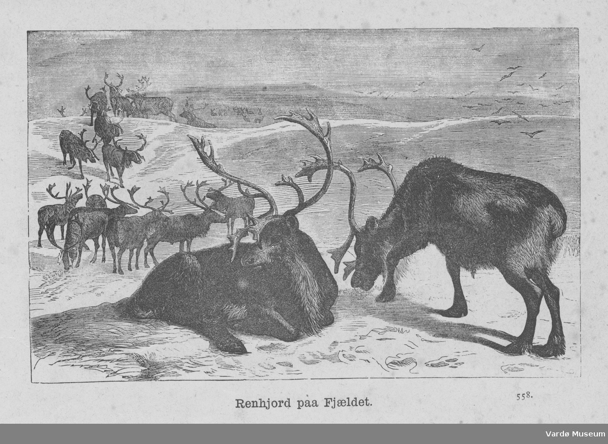 Tresnitt med reinsdyr i fjellet