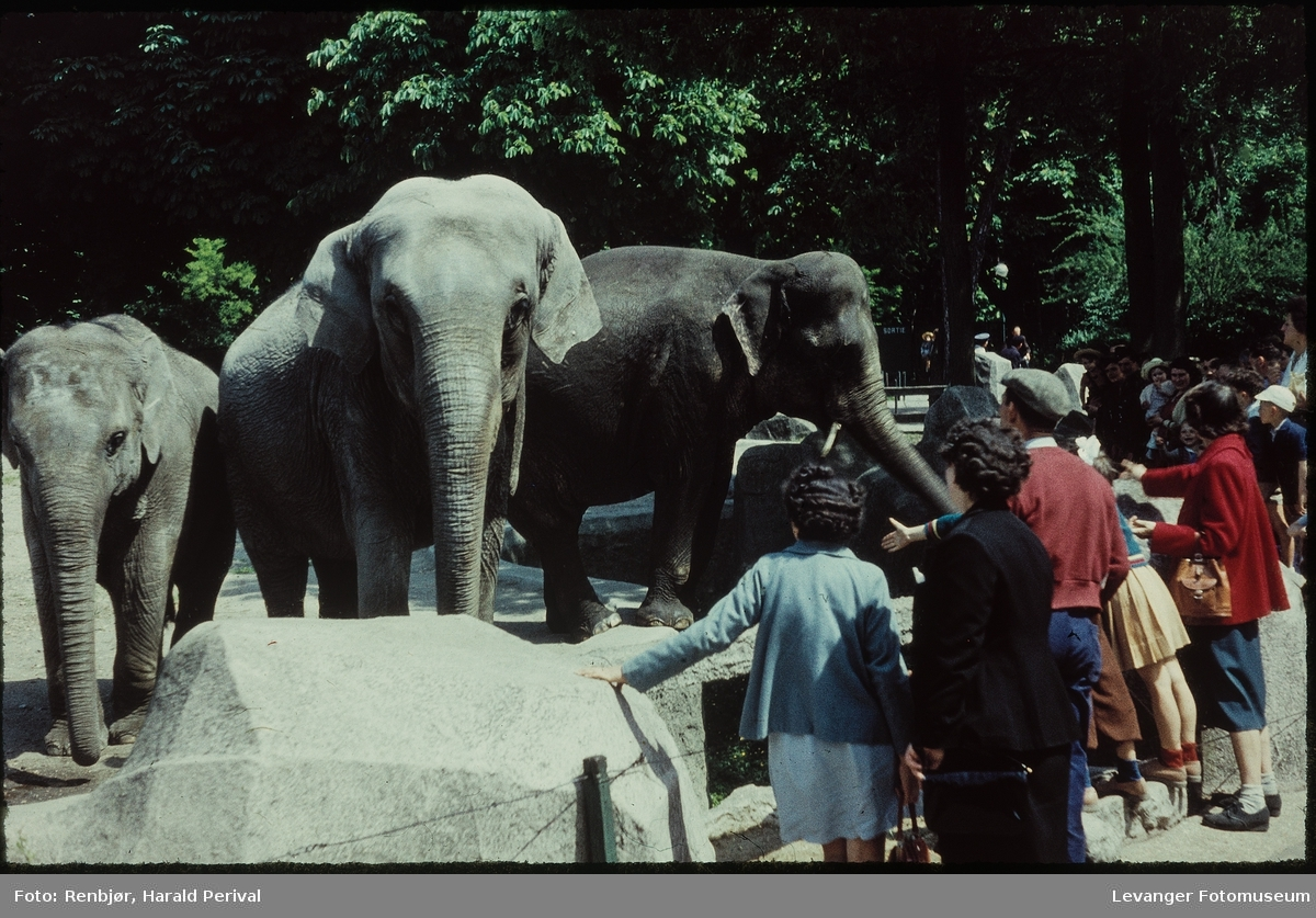 Fra dyrehagen, zoo i Paris.