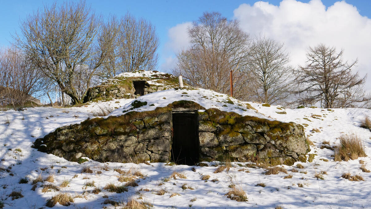 jordkjellar i snødekt landskap (Foto/Photo)