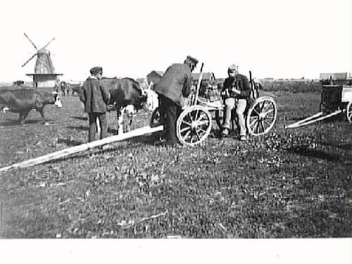 Kreatursmarknad i Morup. En pojke och ett par män är samlade vid en vagn med kor intill. I bakgrunden syns en väderkvarn.