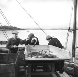 Fiskehandlere i Oslo havn. Juni 1954.