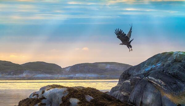 Roar_hlander.jpg. Foto/Photo