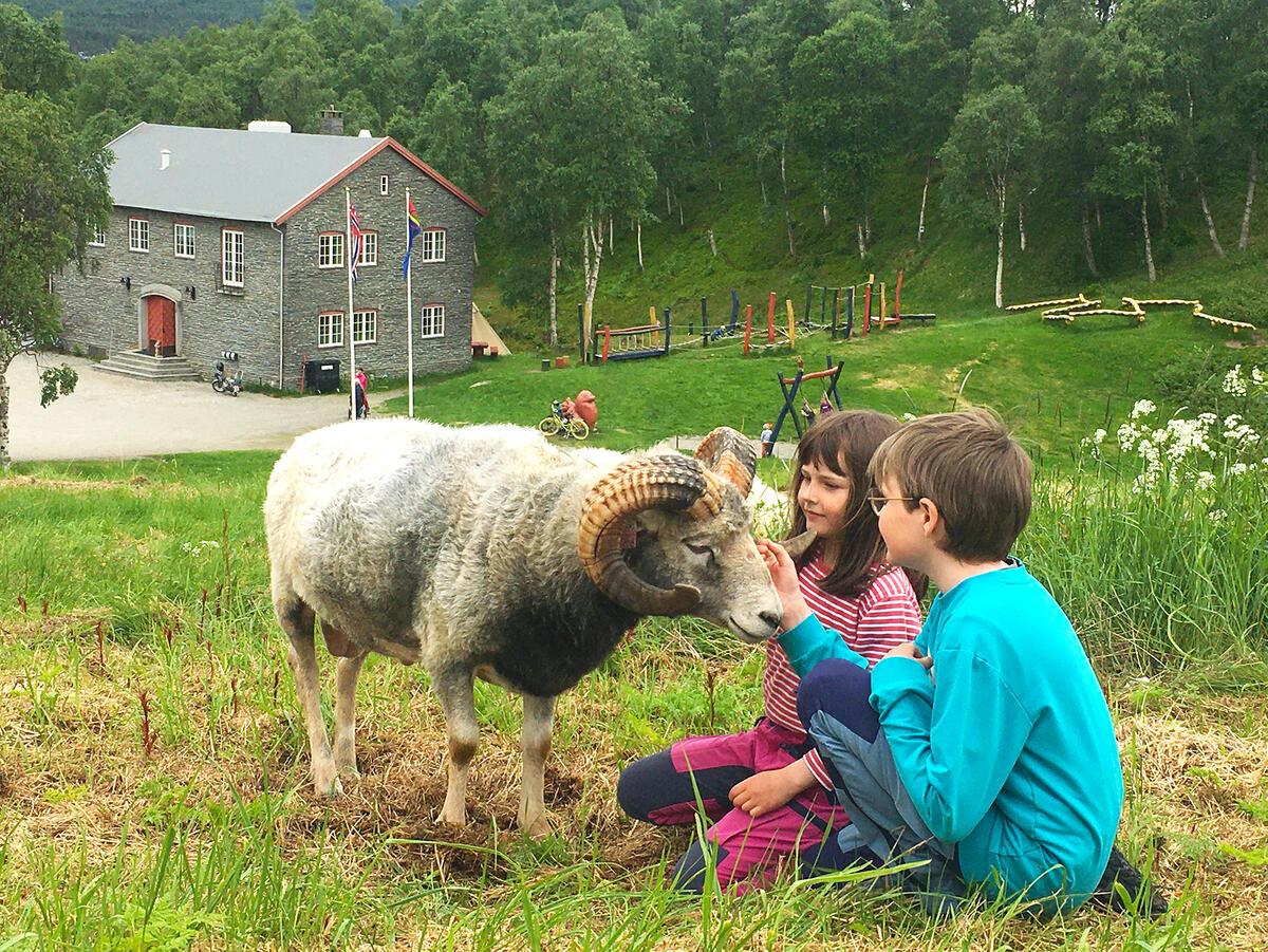 På Doktortjønna kan du møte flere dyr, blant annet geiter. (Foto/Photo)