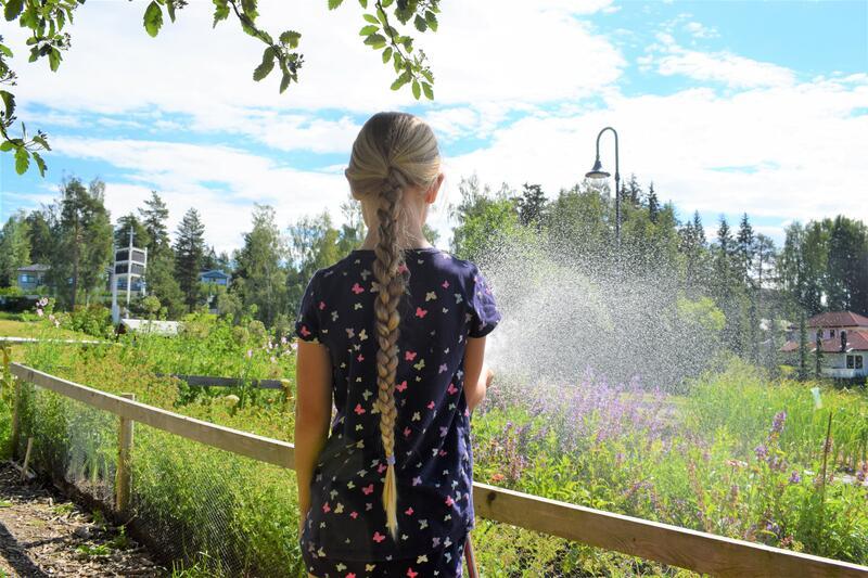 Jente, som står med ryggen til kamera, vanner skolehagene på Lørenskog bygdemuseum. (Foto/Photo)
