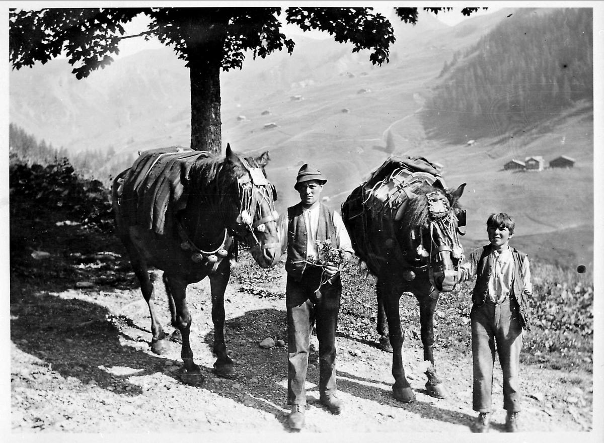 Landskap, hester, mann, gutt