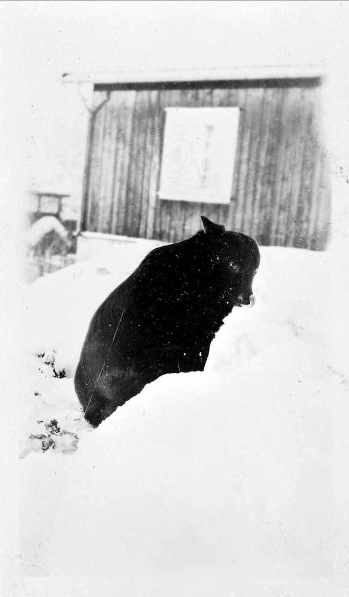 Hund, snø
