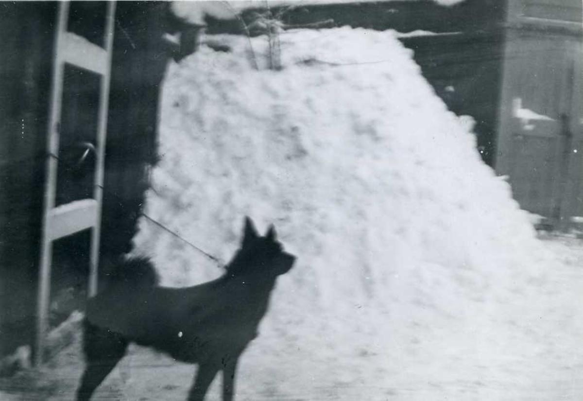 Hund, snø, hus