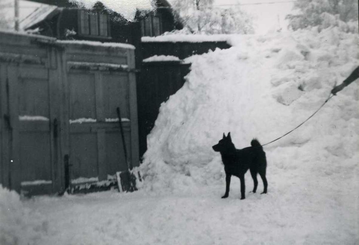 Hund, snø, port