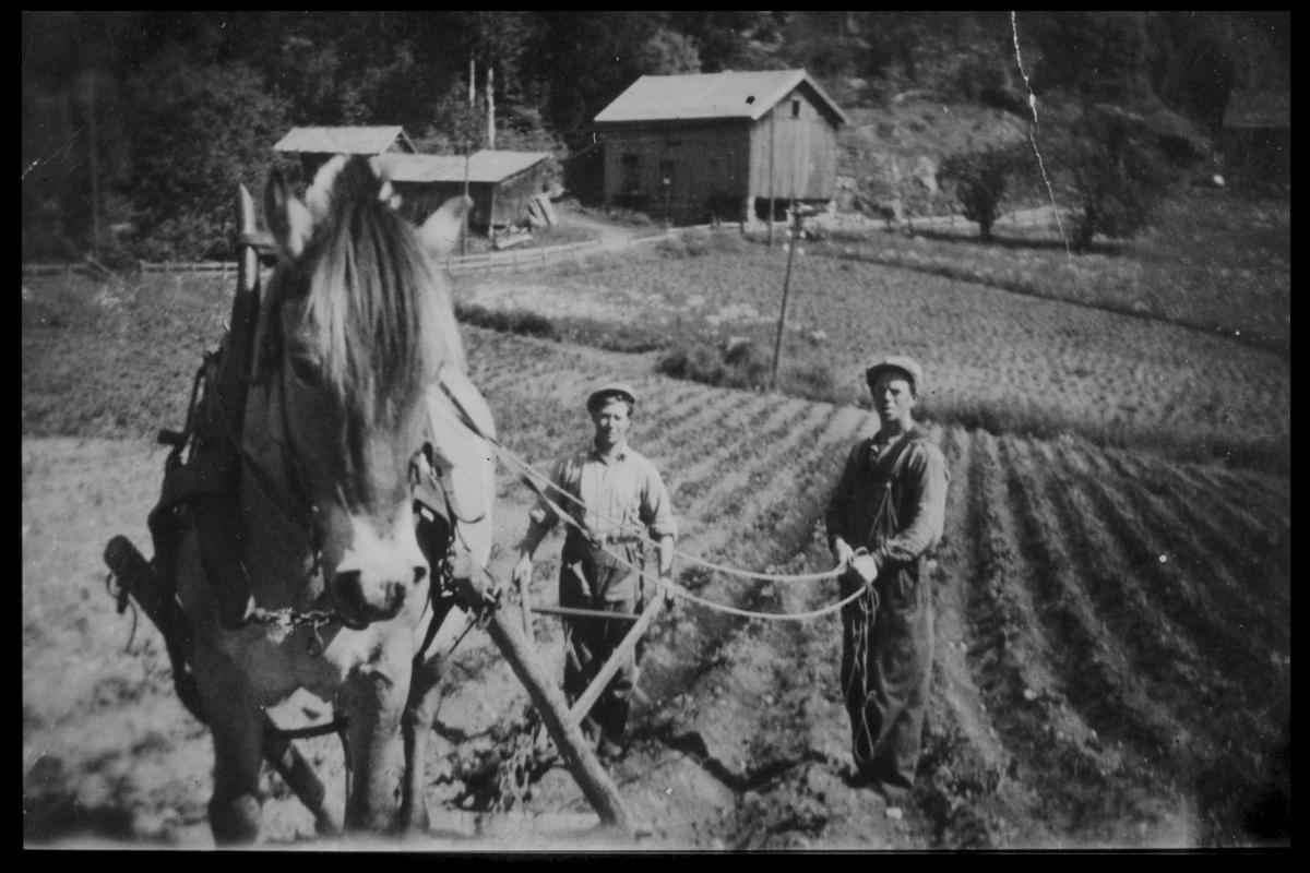 """Arendal Fossekompani i begynnelsen av 1900-tallet CD merket 0469, Bilde: 28 Sted: Bøylefoss Beskrivelse: """"Jørgen i dalen"""" og Leonard Hushovd pløier med hest"""