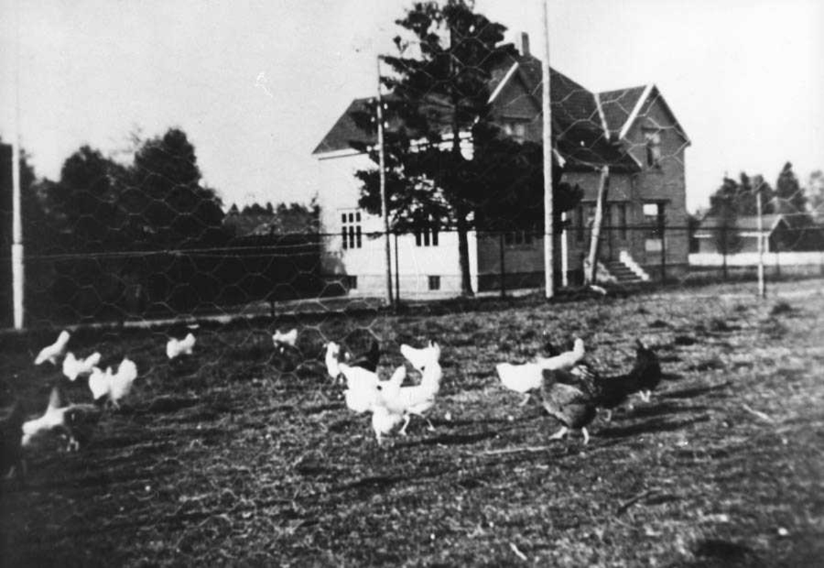 Høner, bygning, jorde