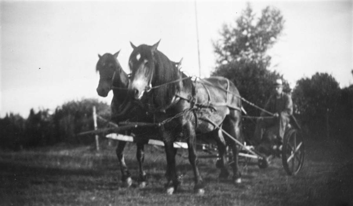 Hans Ruud på slåmaskinen. Hestene fra h. Fritjof og Julius.