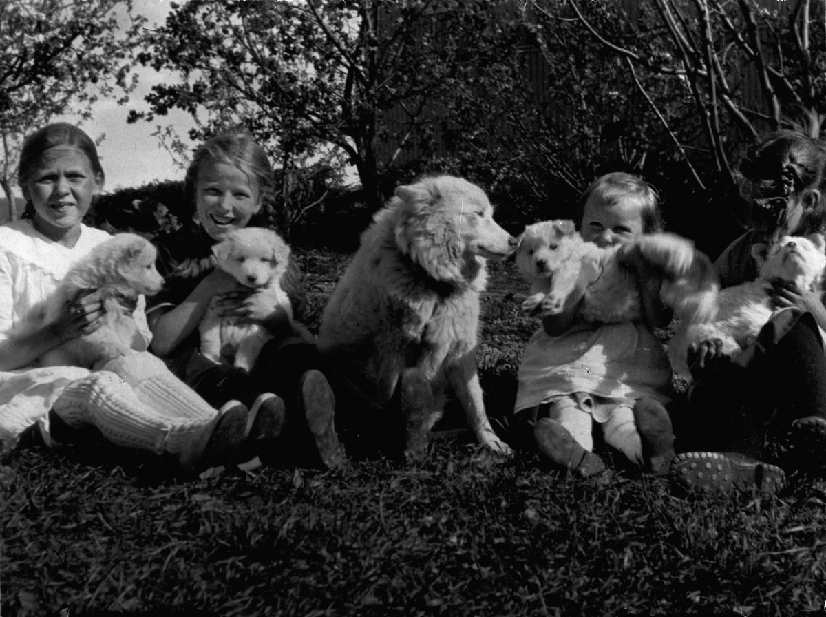 Barn med hunder.