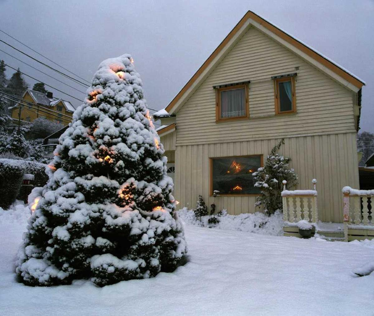 Julebelysning  Hvit julebelysning på tuja ved enebolig