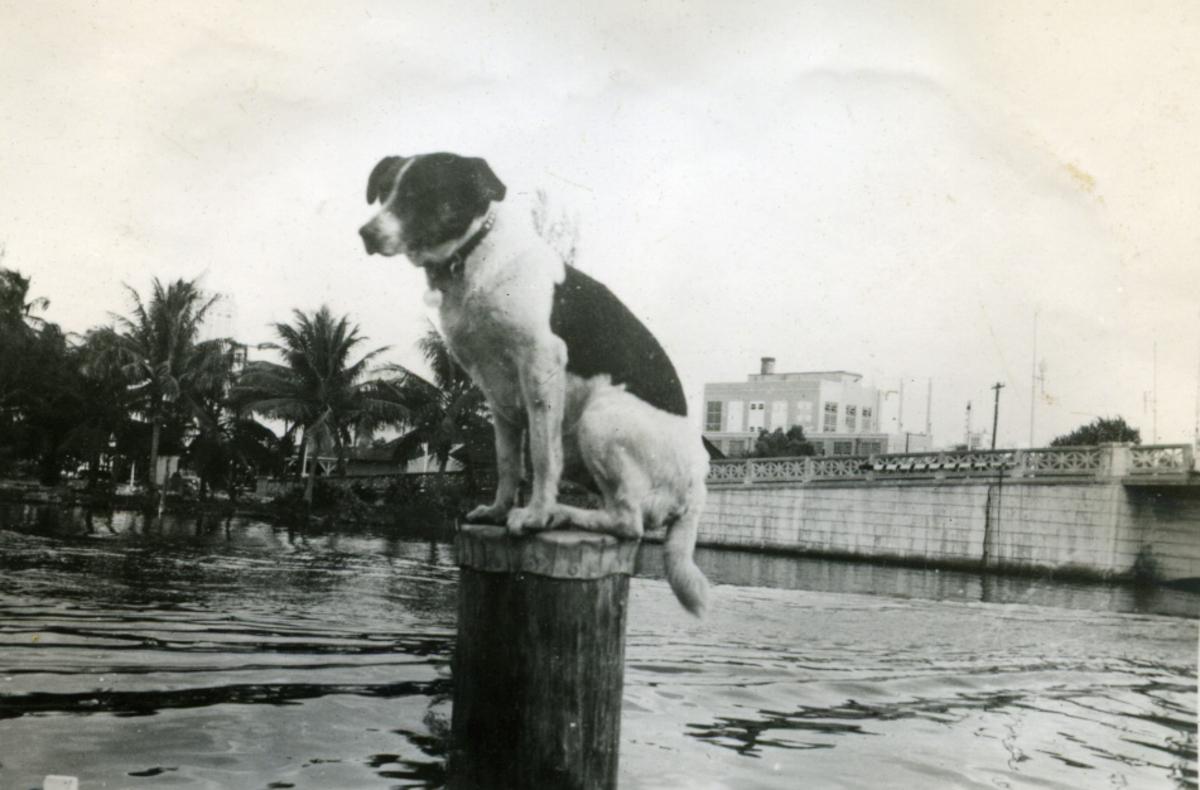 Album Ubåtjager King Haakon VII 1942-1946 Forskjellige bilder. Skipshunden.