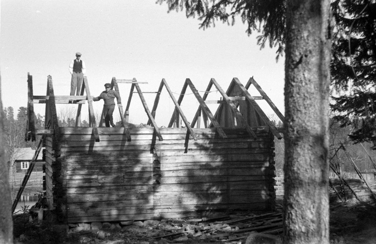 Oppsetting av Skjegstadhytta på Furubergstranda, Hamar. Tømmehytte. Hytta settes opp etter flytting fra Løten 1935.