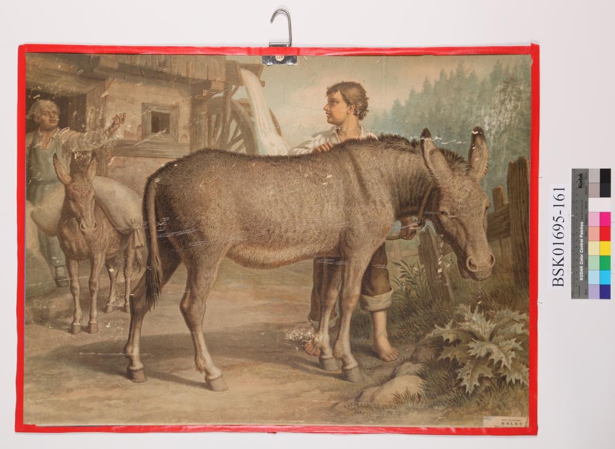 Eseler
