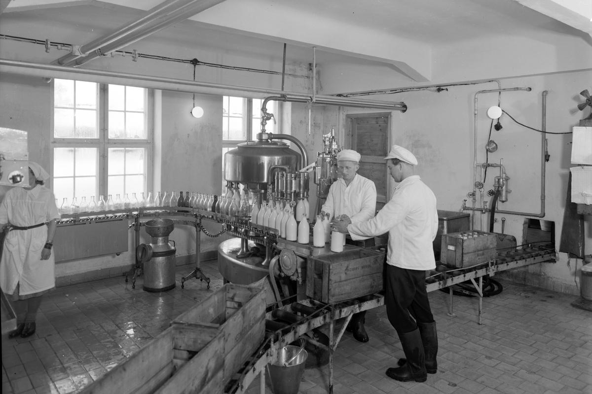 Hedmark meieri, Vangsvegen 185, Hamar. Interiør. Melkeflasker på produksjonsbånd, settes over i melkekasser. Ukjente meieriansatte. Foto Normann3-4. 04. 1951