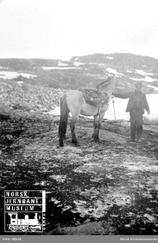 Mann med kløvhest mellom Voss og Taugevatn