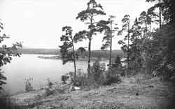 Utsikt over Oslofjorden fra Bygdøy mot Lysaker.